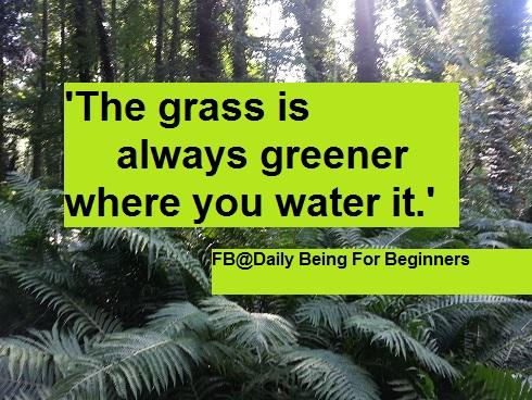 DBB_21_Grass